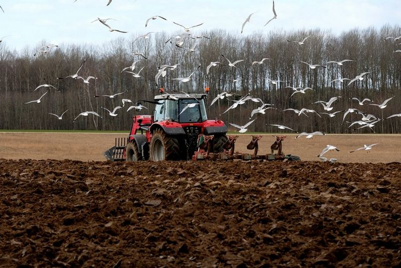 Turkish government offers 75% seed subsidy to farmers to boost yields